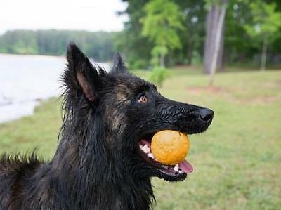 Yellow Zogoflex Air Durable Ball Dog by Paw